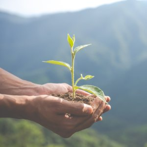Tiny green tree seedling transported using 2 hands