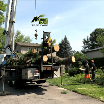 Natures Shade Tree Care - Tree removal process on-site