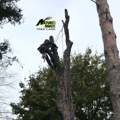 Natures Shade Tree Care - Cabling and Bracing Tree Removal