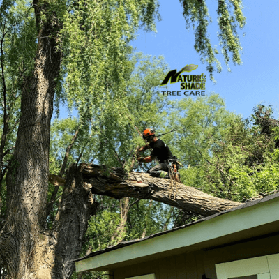 Natures Shade Tree Care - Emergency Tree Removal which fell onto a house and damaged the roof