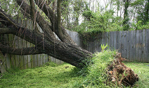 TREE-FALLS