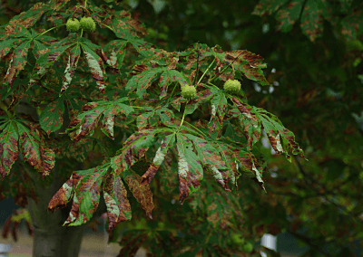 Tree is sick