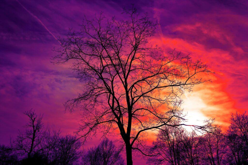 4 winter tree care tips