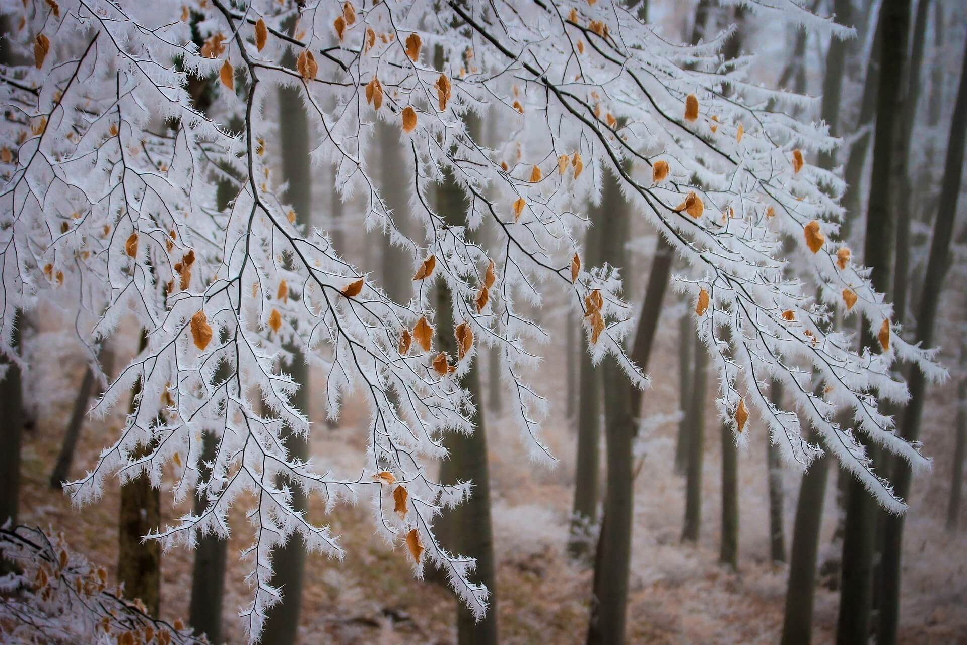 5 winter tree care issues