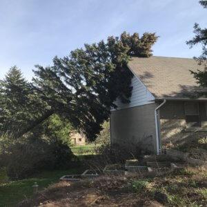 Tall twenty eight foot pine tree fallen on side of house
