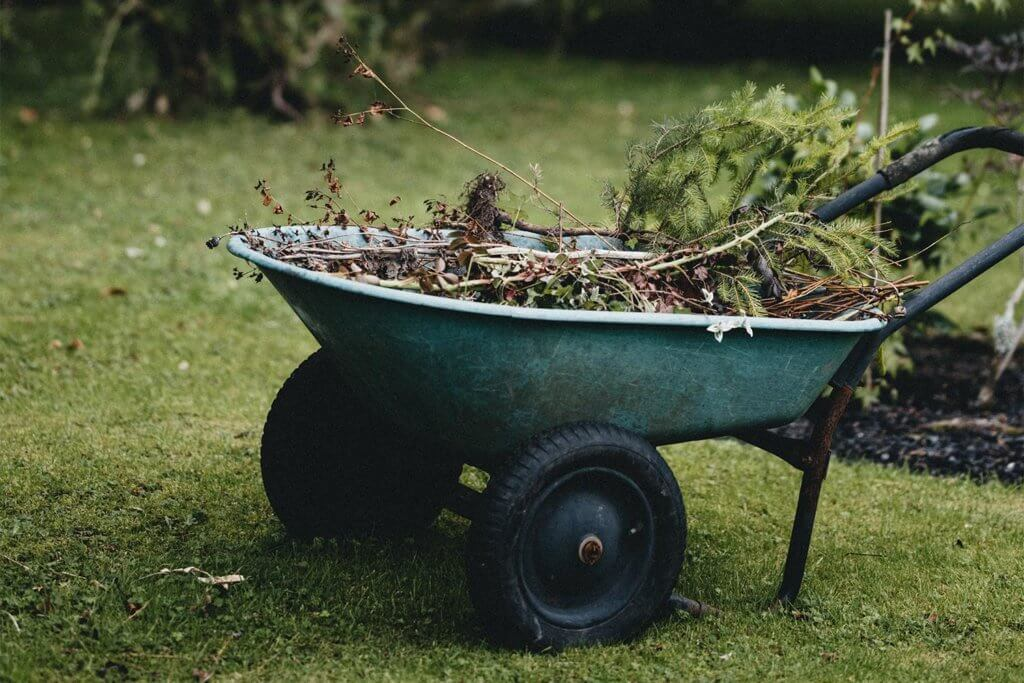 Leftover leaves in a wheelbarrow after tree pruning