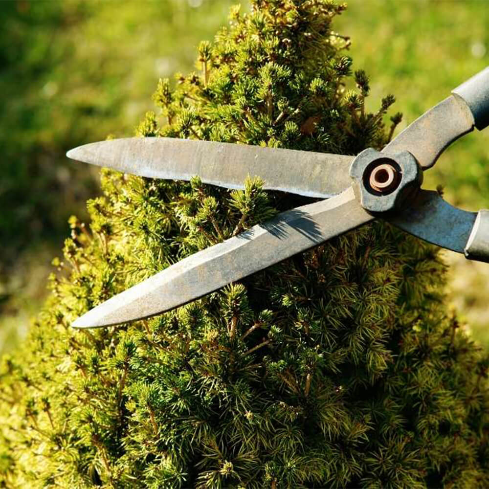 Newmarket Tree Pruning Services