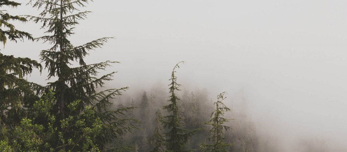 7 reasons to love your evergreen trees